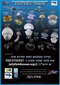 jellyfishposter1